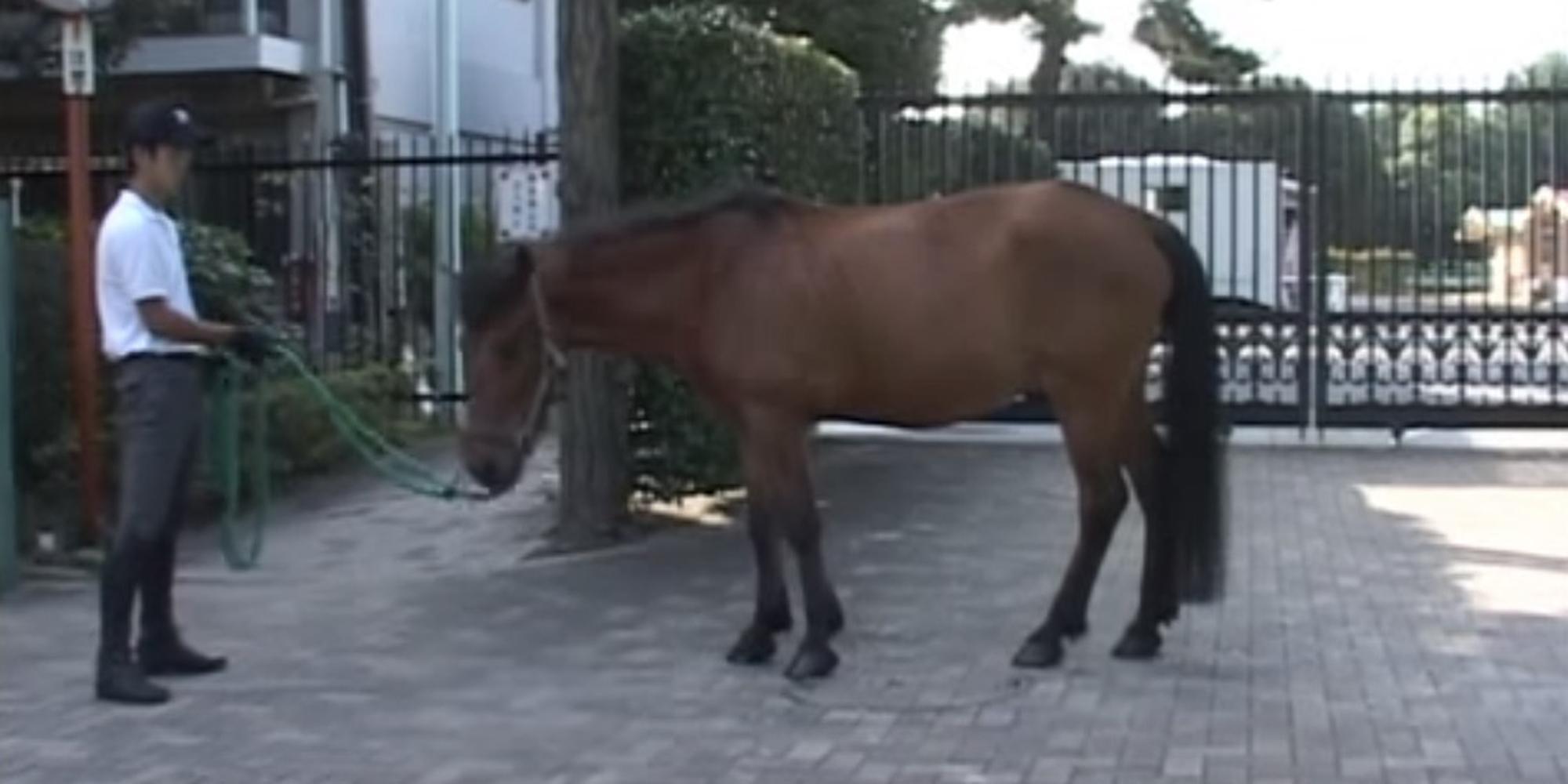 木曽馬─ Kisouma