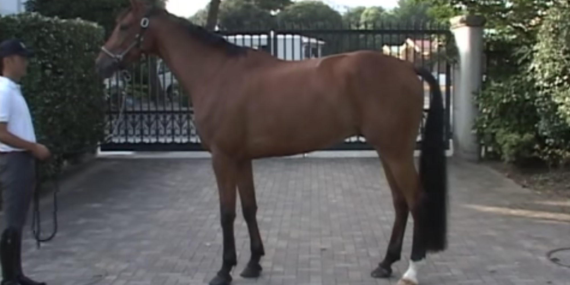 日本スポーツホース─ Nihon Sport Horse