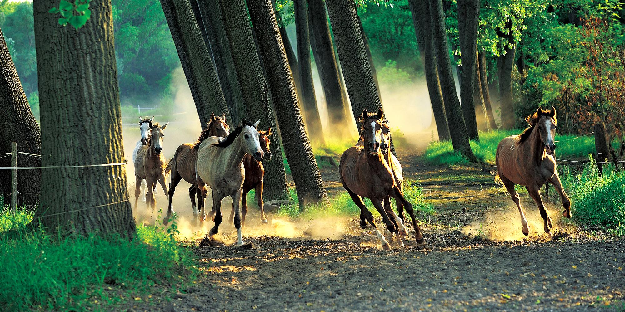 理想の馬と出会う、乗馬大国ハンガリーの2つの生産・育成牧場 ①_バーボルナ国立スタッド・ファーム