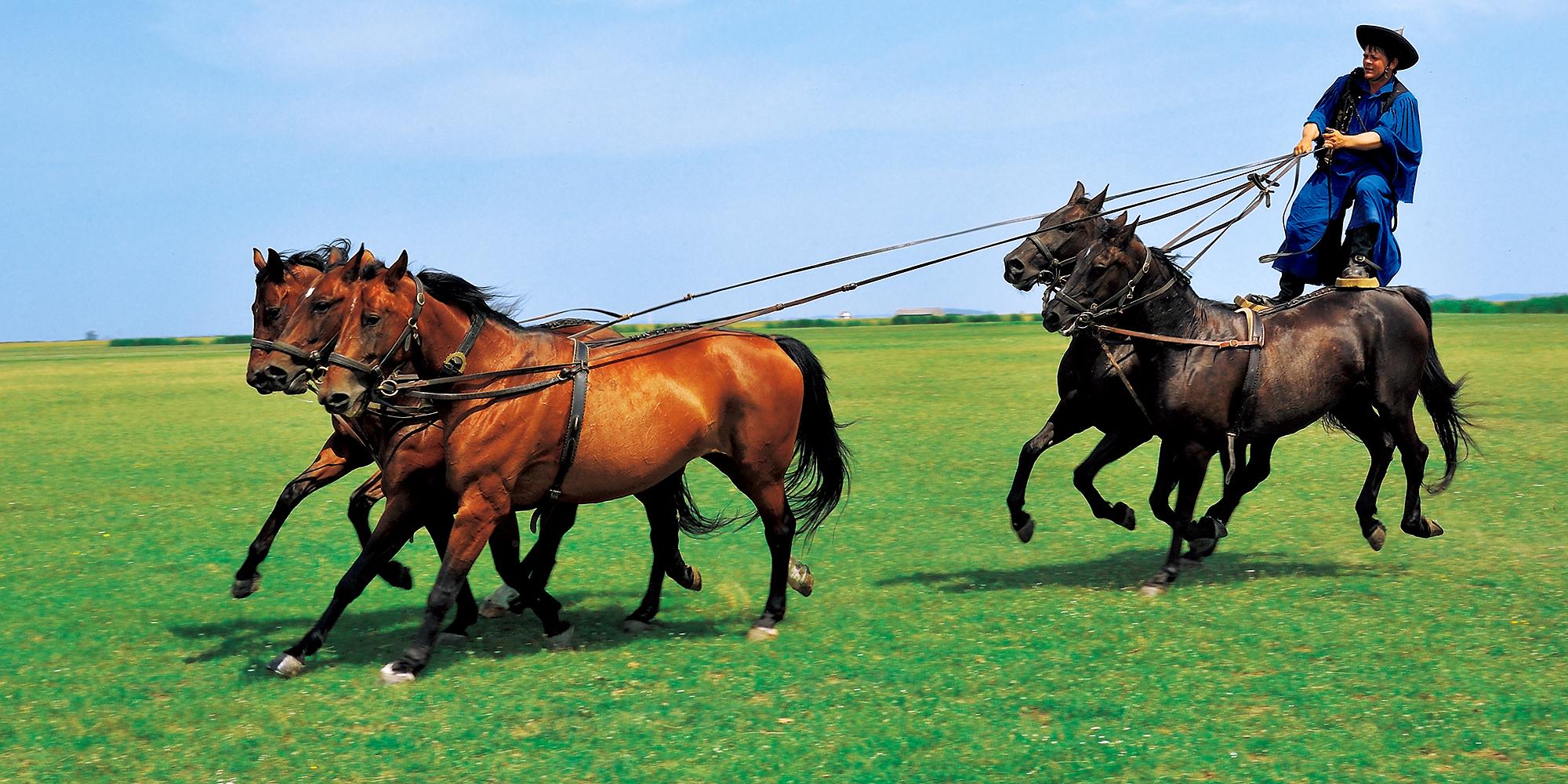 ハンガリーの原風景「ホルトバージ」の大平原で馬を駆る