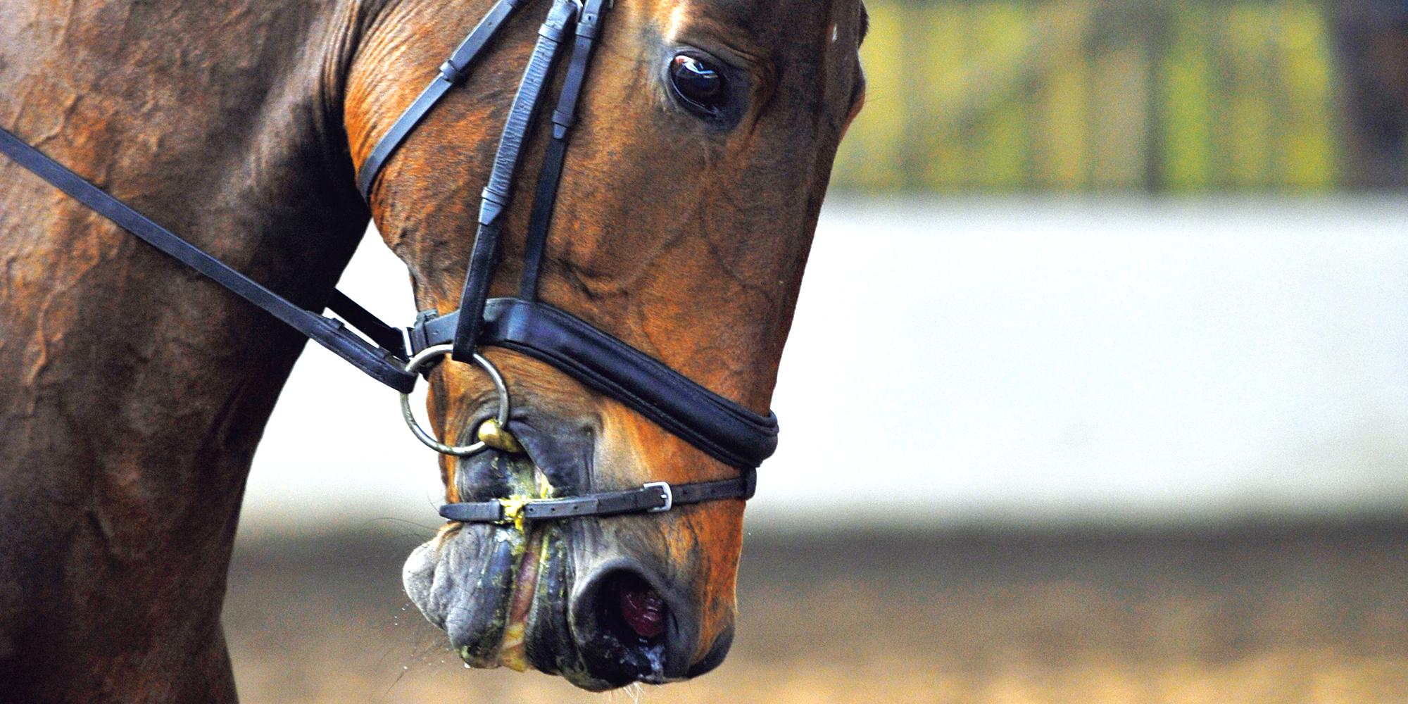 もっと知りたい銜(ハミ)の極意_① 馬と人に優しい「ハミ」とは