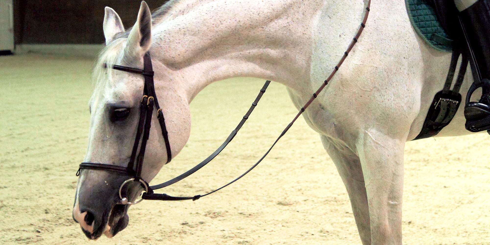 もっと知りたいハミの極意_② ハミで解決! 馬の問題行動